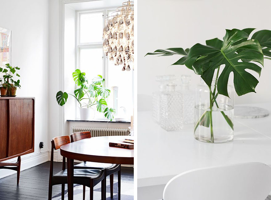 Plantas de interior de gran tamaño
