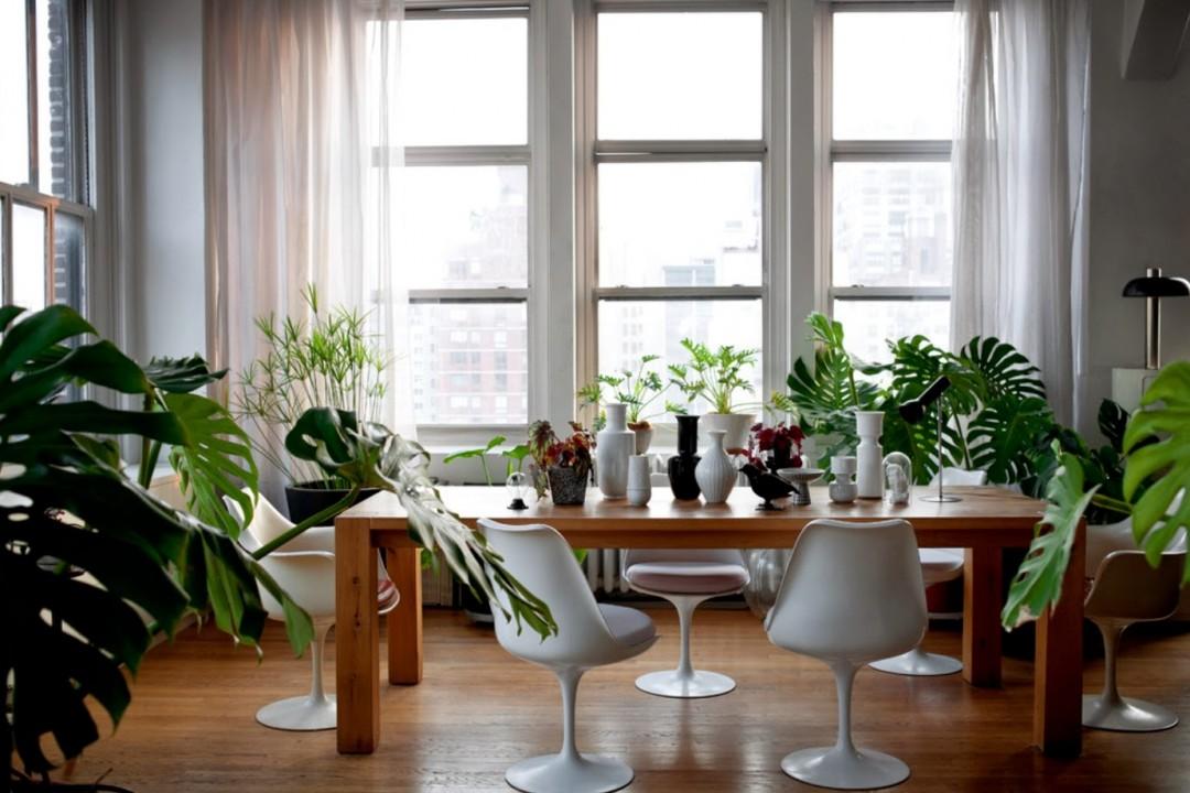 plantas tropicales Archivos - Noveno Ce