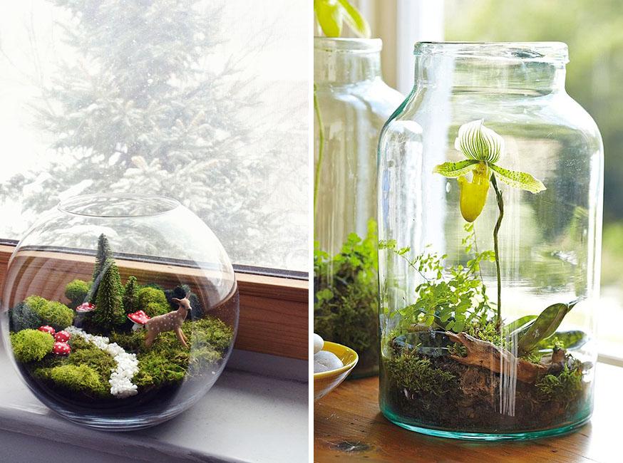 terrario de plantas de interior