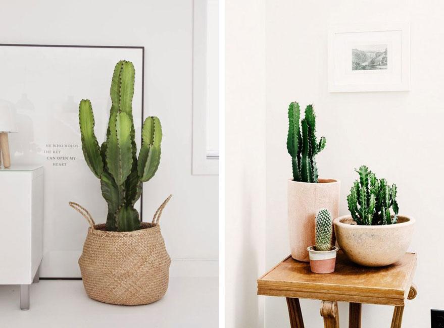 Cactus y suculentas, una tendencia decorativa en boga